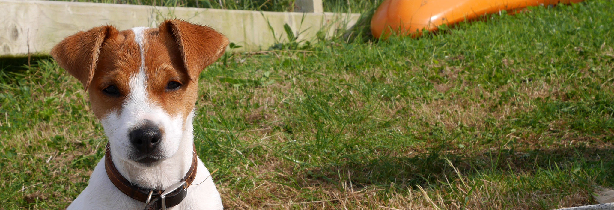 Ways to Buy
